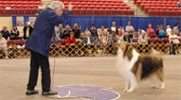 Lassie with Bob Weatherwax at the 2007 Collie Club of America national.