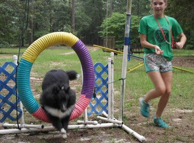 Summer camp with sheltie jumping thru ring.